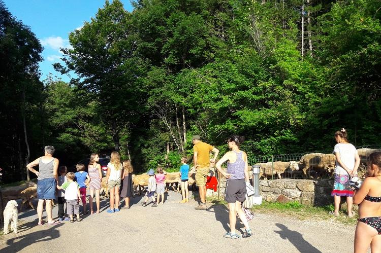 moutons-camping-la-cascade-Lozere